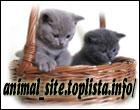 Polskie Strony O Zwierzętach